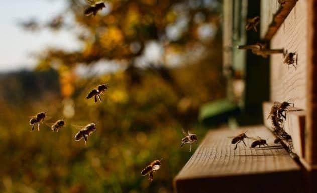Fût acier sans bpa apiculture